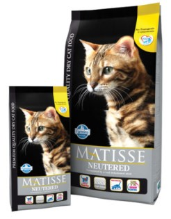 Matisse Neutered
